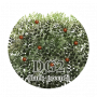 products:icon_dg2.png